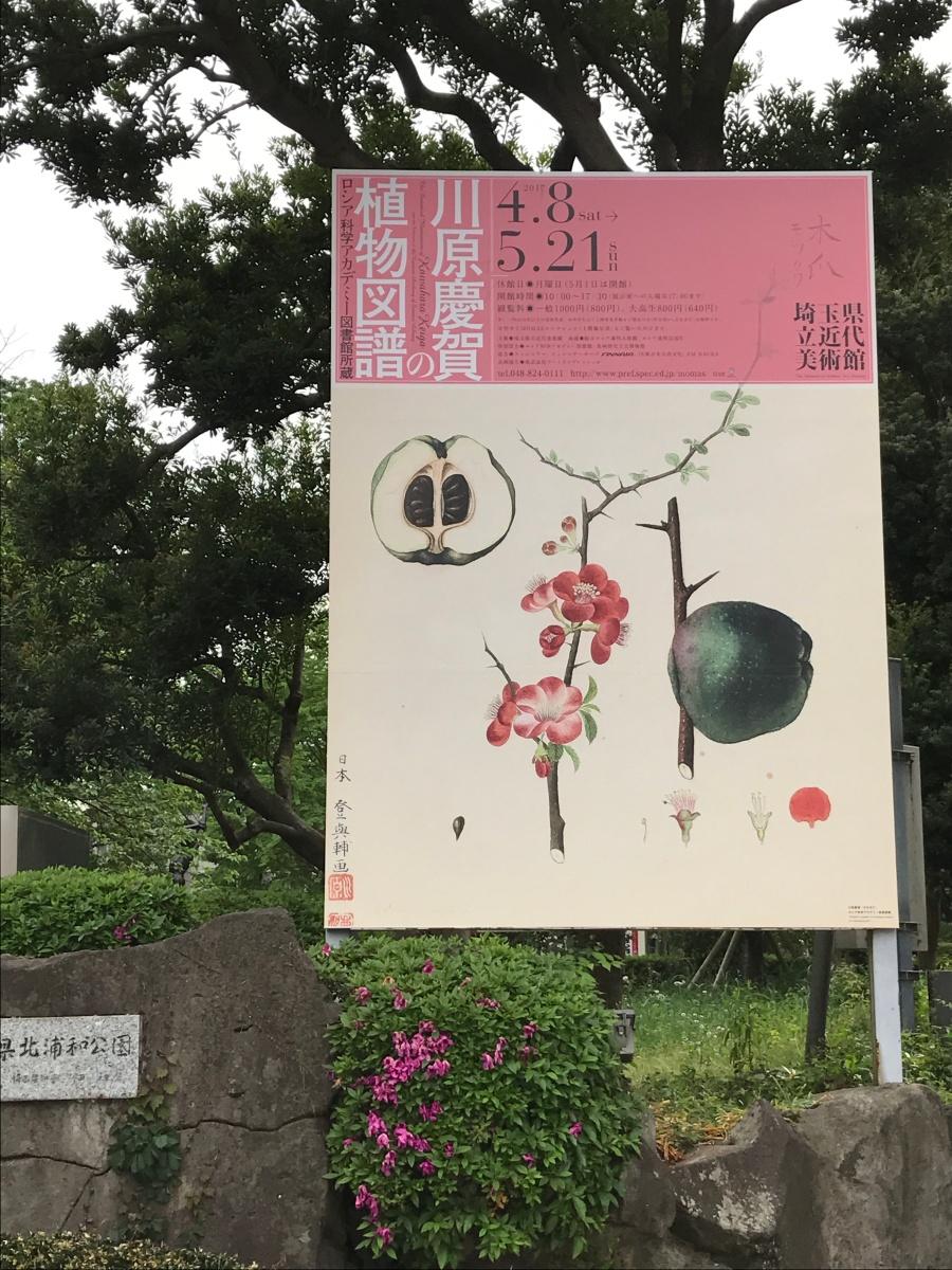 川原慶賀の画像 p1_37